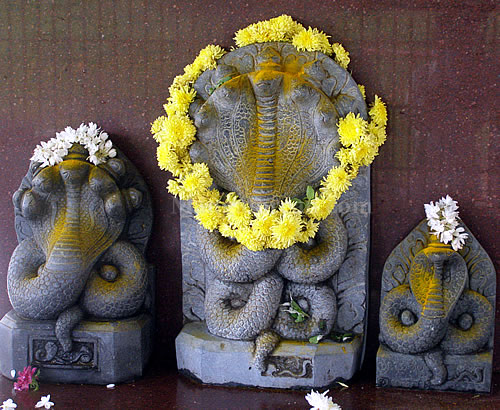 Naga Panchami on August 1st 2014