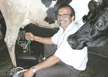 Milking Machine – An Ingenious and Fast Solution to Milk Cows