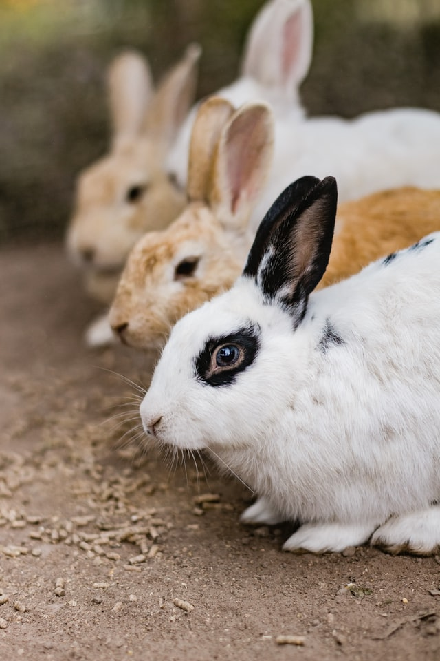 No to import of animal-tested cosmetics