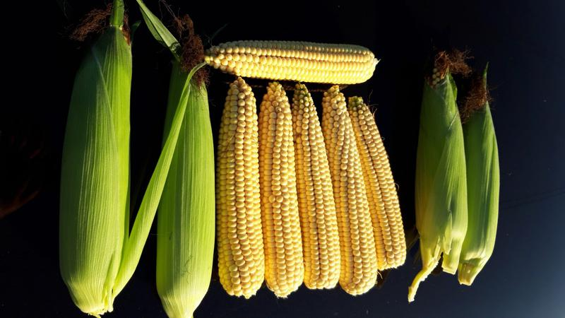 Several Benefits of Sweet Corn