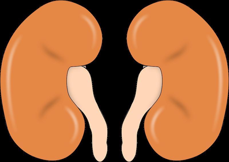 Gender disparity in organ donation