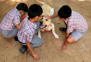 A dog that helps autistic children