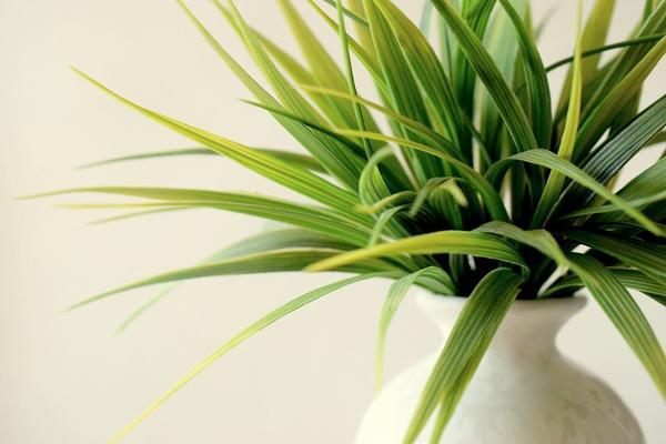 Tips to grow indoor plants
