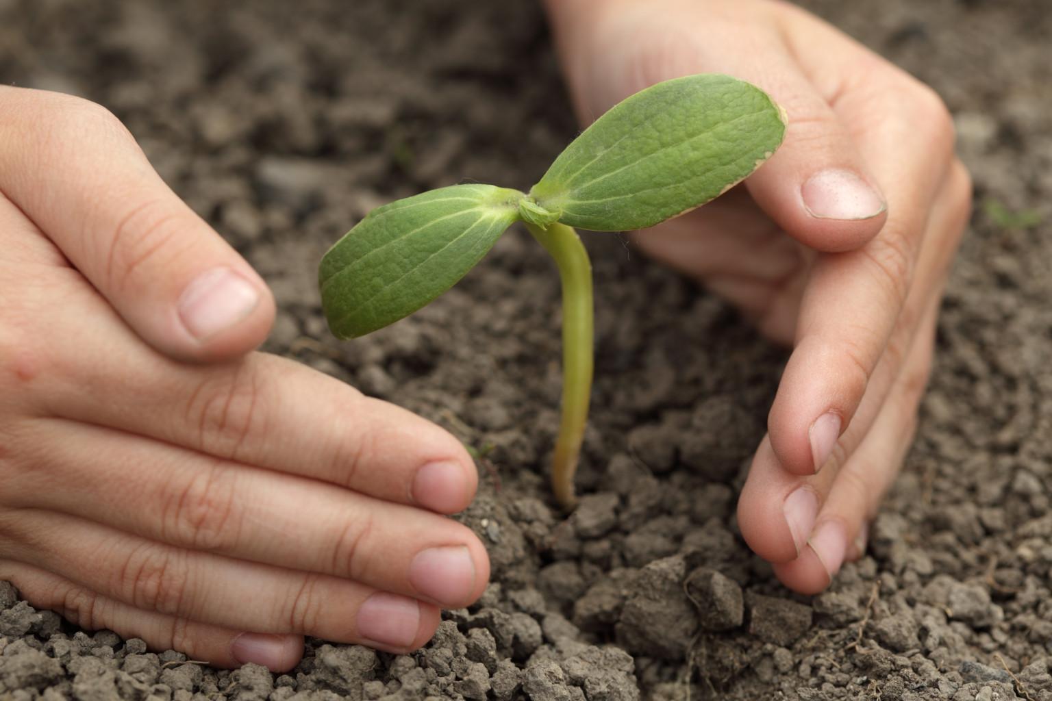 Planting saplings with pocket money