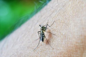 Symptoms to identify dengue