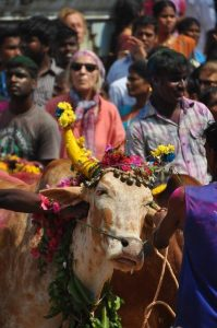 Petitions challenging ban lift on Jallikattu to be considered by SC