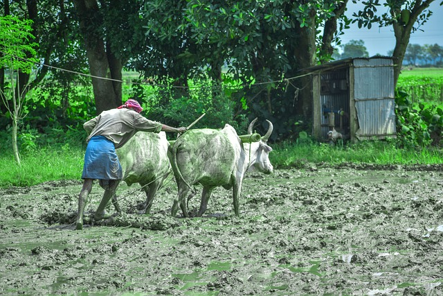 New insurance to cover 50 percent of farmers