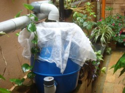 Rain water harvesting at your home