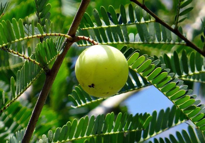 Herbal remedies for eye strain