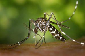 Chikungunya cases increase to 560 in Delhi