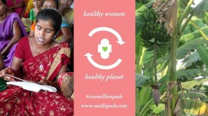 Sanitary pads from banana fibre