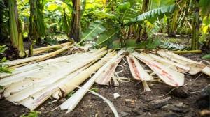 Ecofriendly banana fibre jeans developed by Chennai weavers