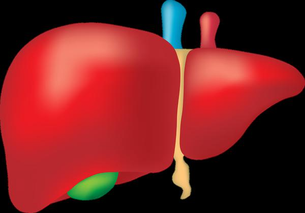 Signs of liver failure