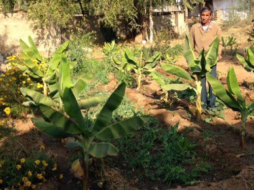The IIM graduate who turned to farming