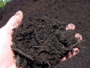 Jeevamrutham, organic manure for chemical free crops