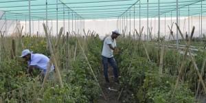 EarthFood – Affordable organic food
