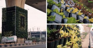 Bengaluru gets second vertical garden