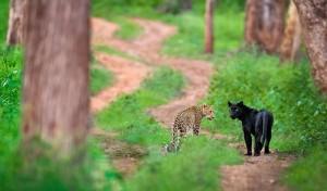 Nature inFocus – A platform for nature lovers