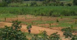 NaPanta – app that helps many farmers