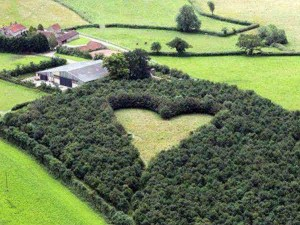 For love: He planted trees for 17 years