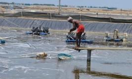 IIT alumnus helps aquafarmers with innovation