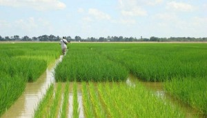 NABARD's water atlas to help farmers get water