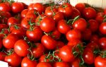 Use tomatoes for your skin and hair