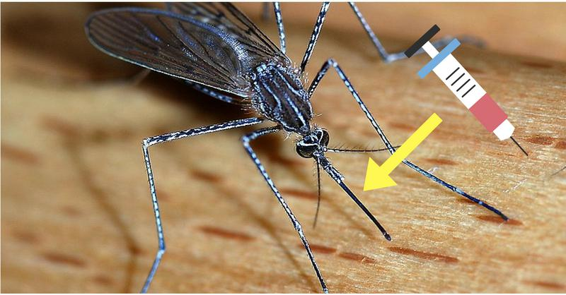 Painless Injections using mosquitoes