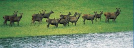 Notable Wildlife Sanctuaries in India