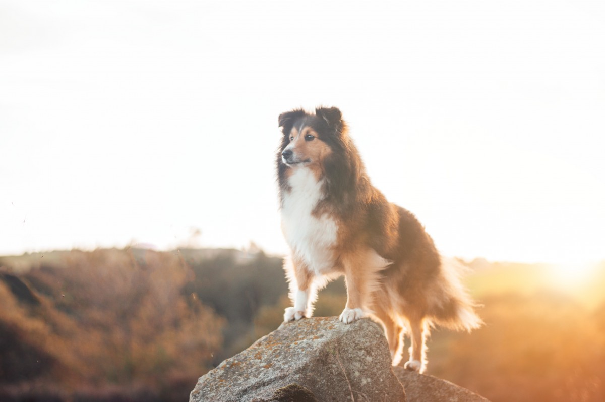Heroic Dog saves family from landslide