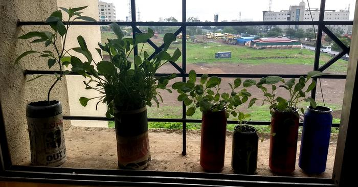 Veggies grow in PET bottles using hydroponics