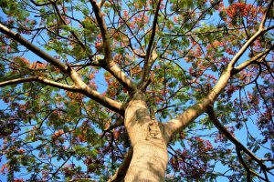 Worship these trees as per your birth star – 3