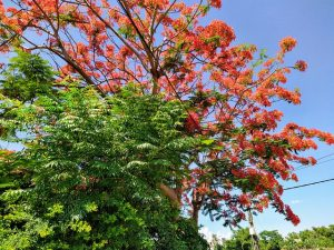 Worship these trees as per your birth star – 2