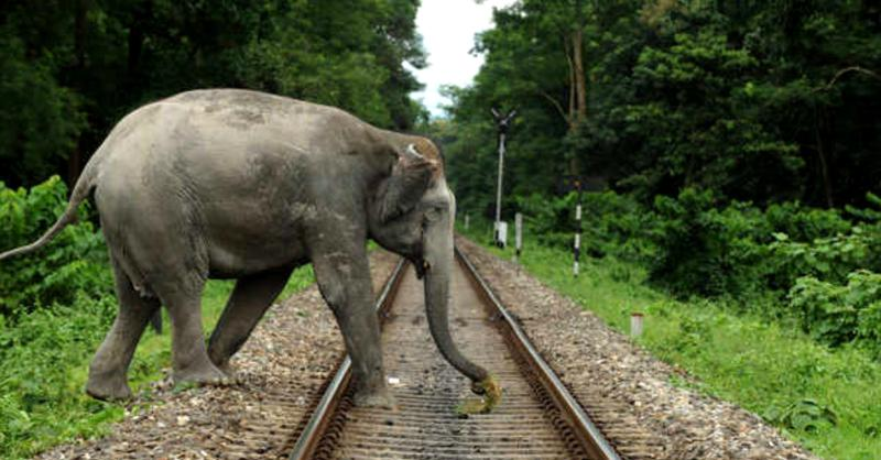 IIT Delhi helps reduce elephant train accidents
