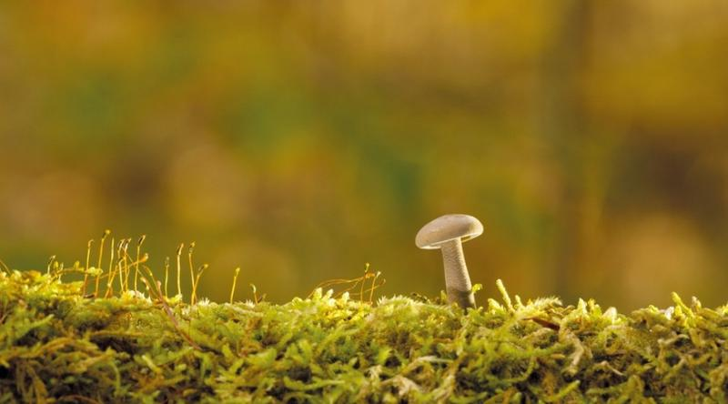 Fungi helps plants grow in low water