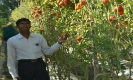 Farmer earns lakhs with chemical-free crops