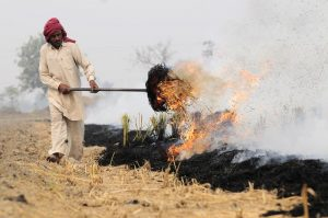 Crop burning leads to severe pollution: NGI