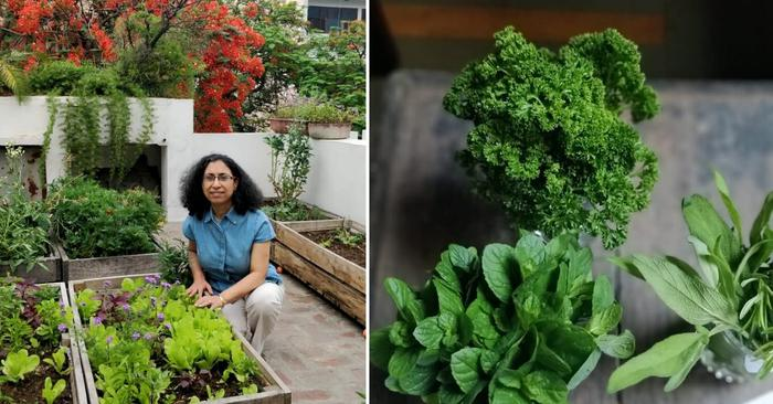 Delhi woman grows chutney greens