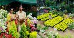 Kerala couple earns lakhs of rupees by growing Bougainvillaea