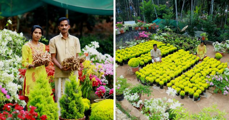 Kerala couple earns lakhs of rupees by growing Bougainvillaea