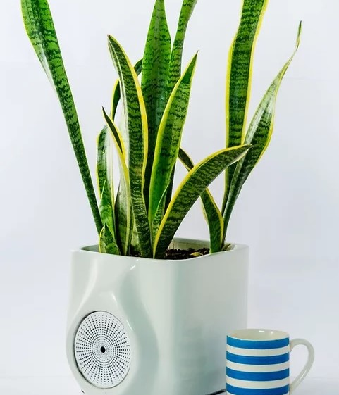 Ubreathe's Smart bio-filter purifies air