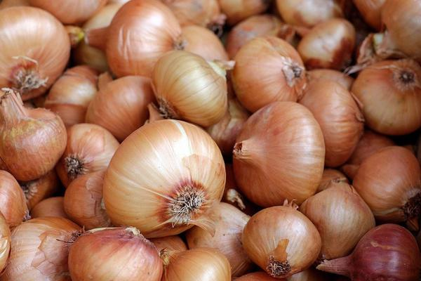Government bans export of onions and farmers protest it