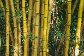 World's tallest bamboo idol of Goddess Durga made in Assam