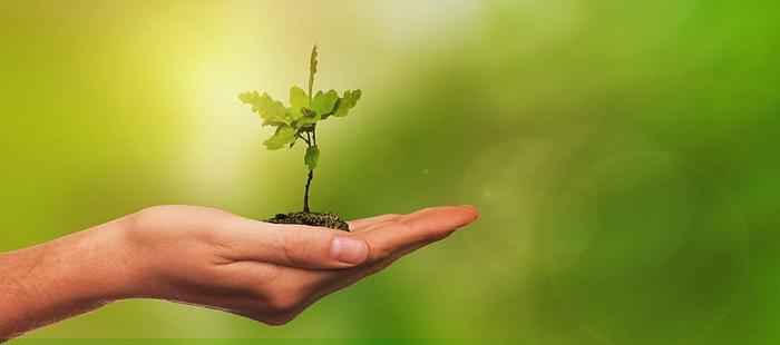 NGO uses trash to plant valuable saplings