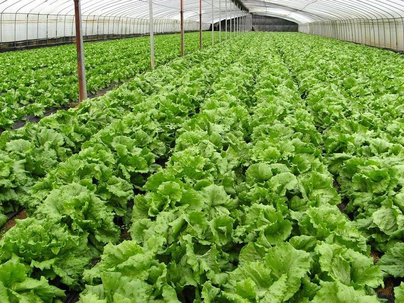 Ladakh man earns lakhs with organic farming