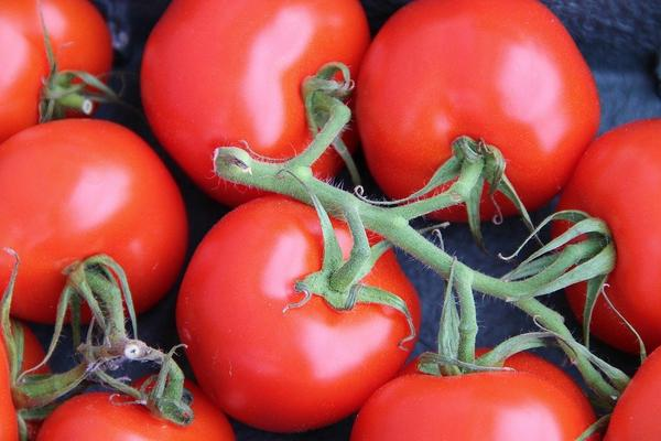 Woman earns handsome money with organic tomatoes