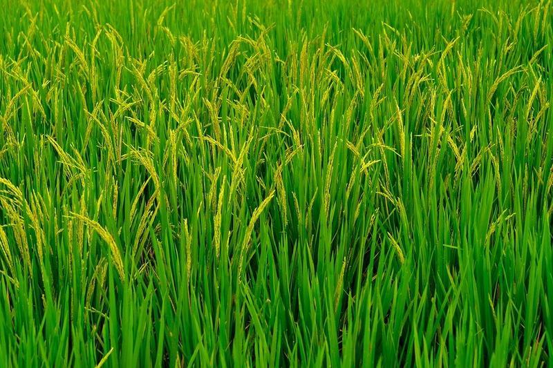 Telangana farmer's innovative farming techniques