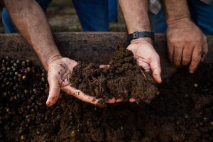 Youth makes organic fertilizer and sells cheaper