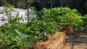 Waste turns into fertilizer to grow organic veggies