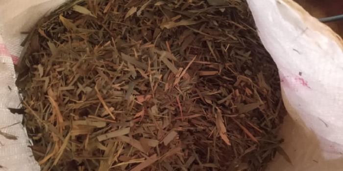 Man exports bamboo leaf tea to Europe